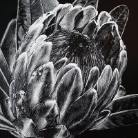 Tracey Stoll | After the Rain | Commended Drawing