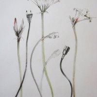 Fiona-Gawronsky---Yin-Yang---Best-Botanical---Charcoal-and-pastel