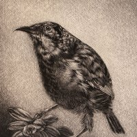 Collared-Sunbird-Scraperboard-for-South-African-Society-of-Artists-Suzanne-Fortgens