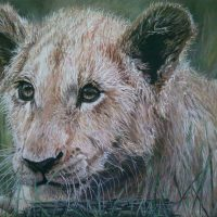 Chantelle-van-Zyl-White-Lion-Cub-Highly-Commended-Pastel