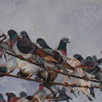 Pam Quinlan | Pigeons | Best Watercolour
