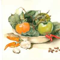 Inge-Semple-Persimmons-Watercolour-Commended